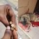Dog shot by policeman in Akure