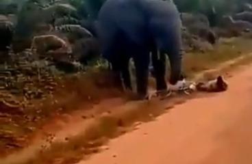 Elephant attacks Bicycle rider